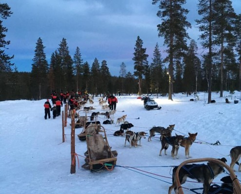 Dog Sleigh Rides in Lapland