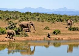 elephant-427138_960_720